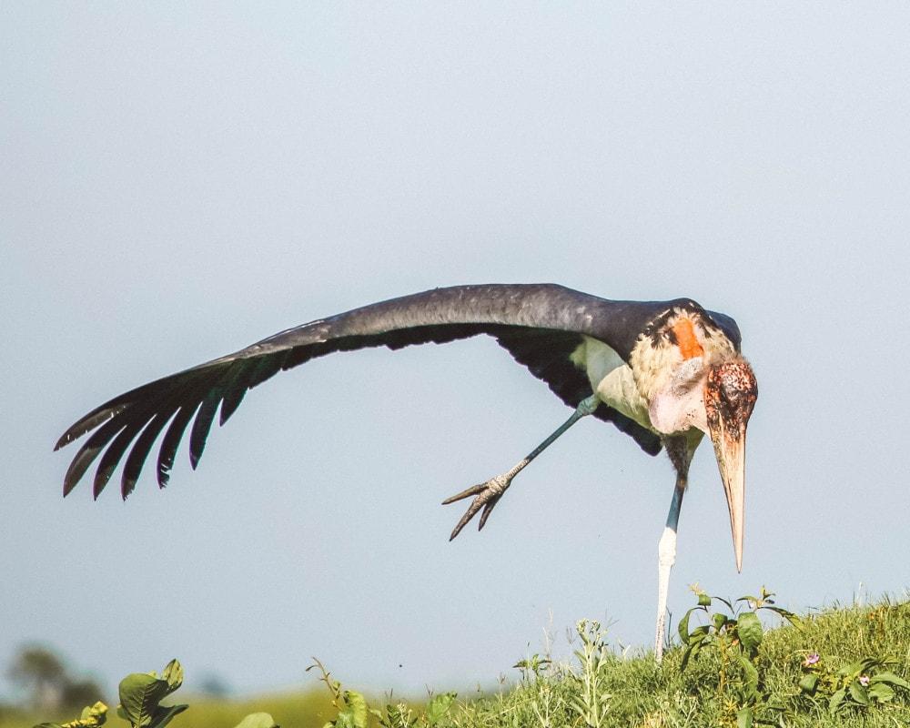 Bird Unfold Africa Safaris