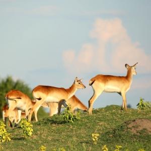 Bokkies Unfold Africa Safaris