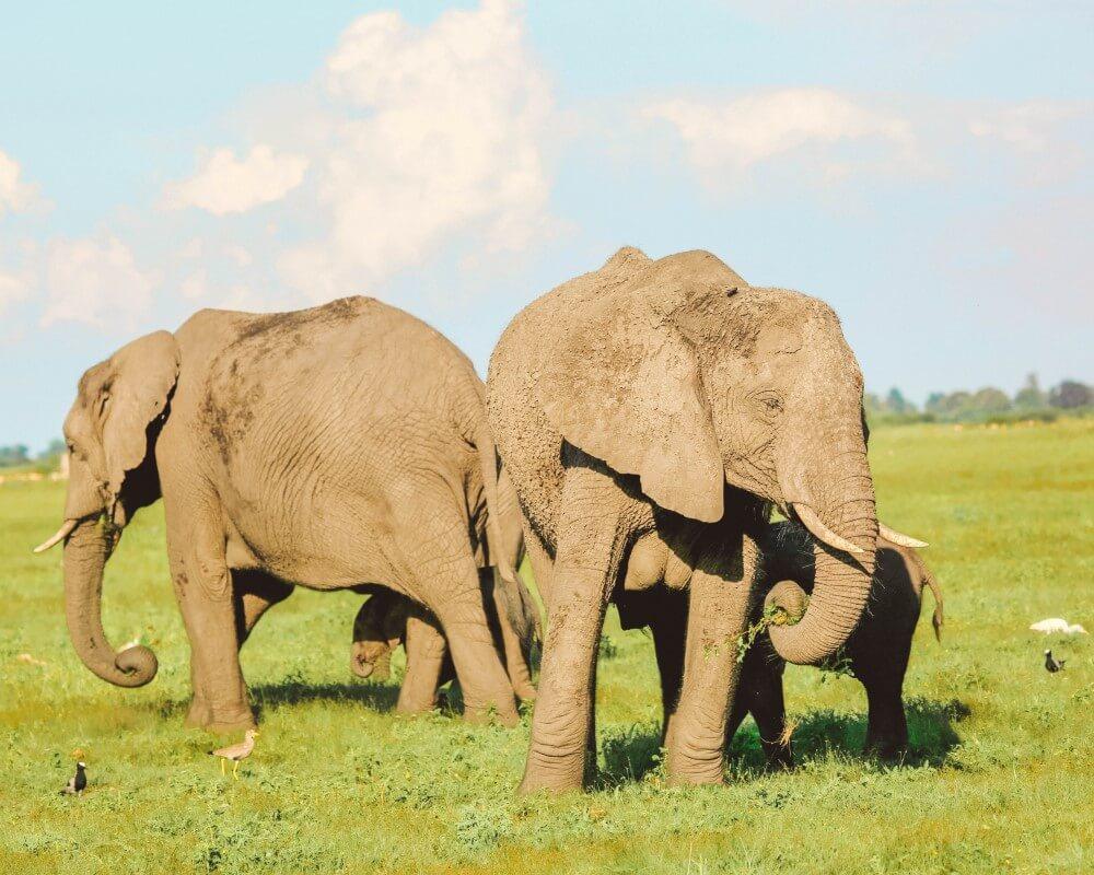 Elephant Unfold Africa Safaris