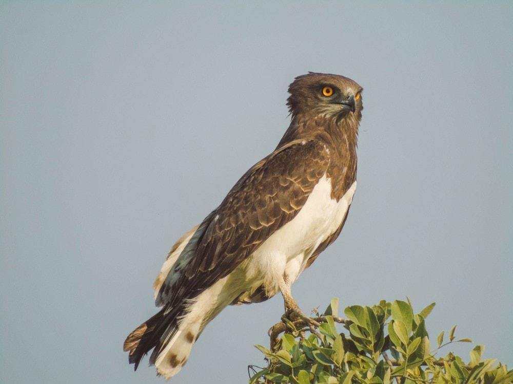 Bird of prey Unfold Africa Safaris